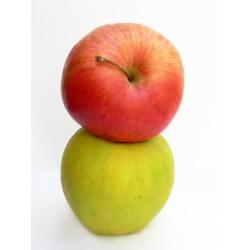 THJ Arôme Duo de pommes  Super Concentre