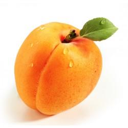 THJ Arôme Abricot Gourmet